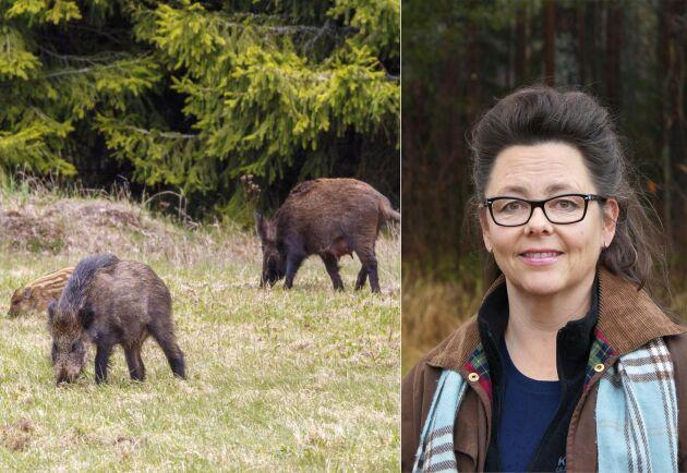 Arja Helena Kautto på Livsmedelsverket är specialistveterinär och ansvarig för vildsvinsköttprojektet.