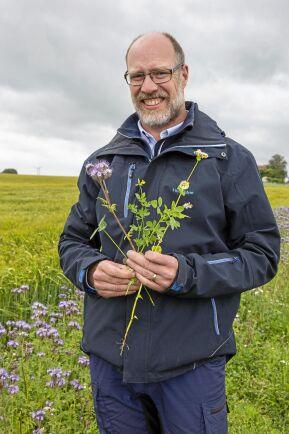 Växtodlingsrådgivaren Mattias Hammarstedt visar upp några av växterna i fröblandningen, klöver, honungsört, gul kärringtand och bovete.