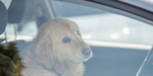Varma bilar – en dödsfälla för hunden