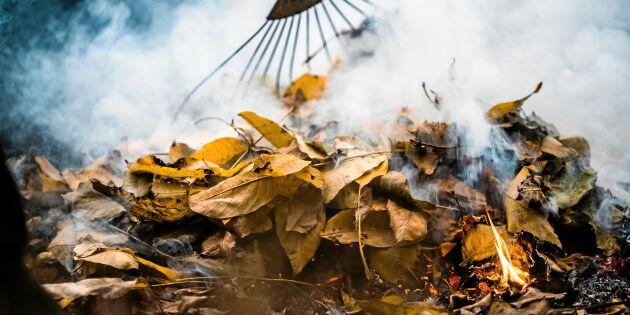 Elda trädgårdsavfall - här är reglerna som gäller