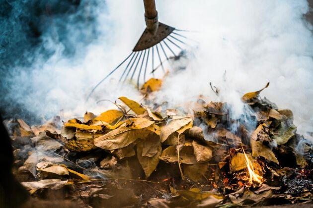 Löv kan komposteras till den finaste mull. Elda inte.