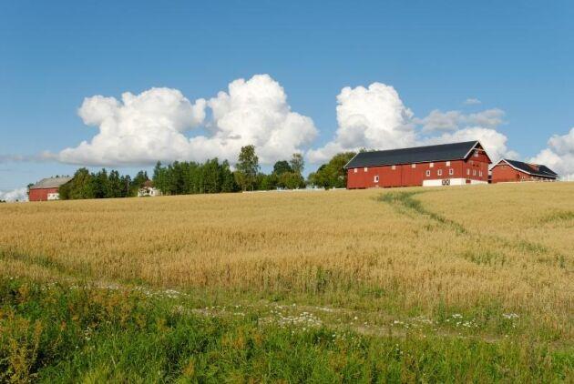 Det har blivit både färre ekologiska gårdar och mindre ekologisk areal för matproduktion i Norge.