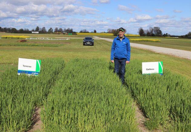 Mats Olsson Sörensson på Syngenta visar hybridkornsorterna Toreroo och Galileoo som ska för första gången ska börja uppförsökas i Sverige.