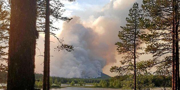 600 miljoner kronor skog upp i rök