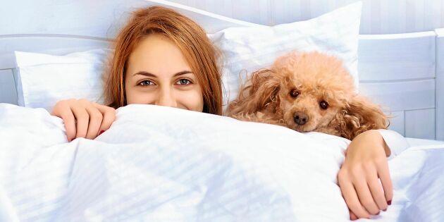 Därför sover kvinnor bättre med hunden i sängen