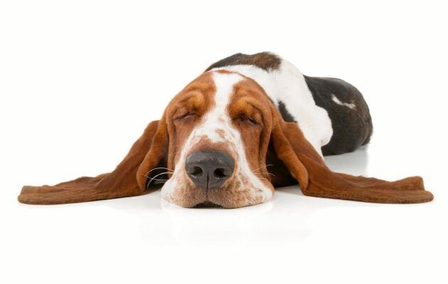 Att aktivera lagom är bra men överaktivera inte. Hunden ska ha lite tråkigt ibland.