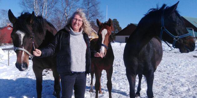 Hon föder upp elithästar – i Norrbotten