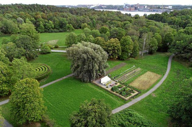 """Bakom """"Allsång på Skansens"""" scen finns en experimentgård för hållbar odling."""