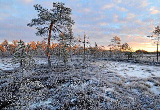 –Den parlamentariska landsbygdskommitténs förslag ser ut att få väldigt liten effekt för landsbygden i Sverige. Vi, som representerar 10 av de 23 kommuner som i utredningen pekades ut som särskilt utsatta, är lurade.