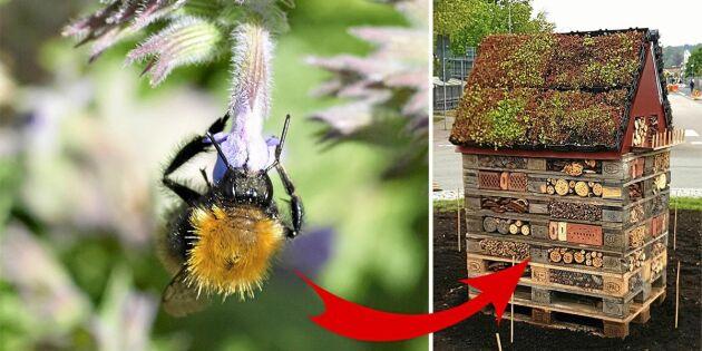 Här satsar kommunen på bina –bygger insektshotell i rondeller