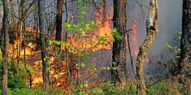 Tidig skogsbrandrisk i år