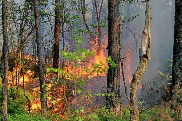 Risken för skogsbränder har kommit tidigt i år.