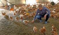 Ekokycklingar lyckat komplement på spannmålsgården