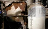 Tre fjärdedelar av EU:s mjölkpulver sålt