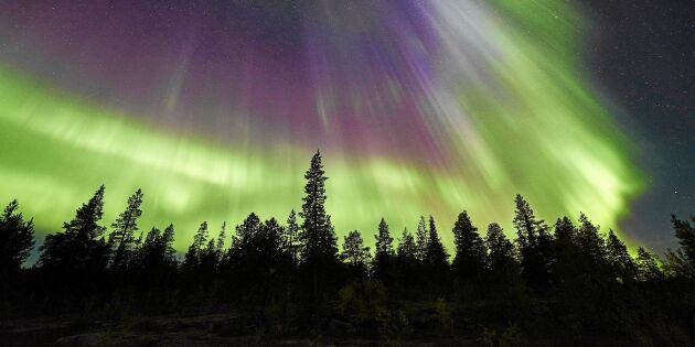 Stora chanser att uppleva norrsken – här kan det ses
