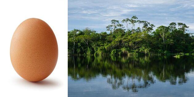 Kronägg klimatkompenserar äggen