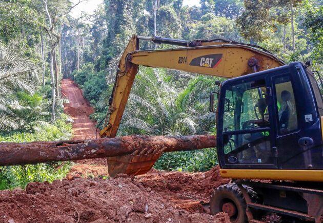 För att hindra illegal avverkning grävs broar bort längs skogsbilvägarna.