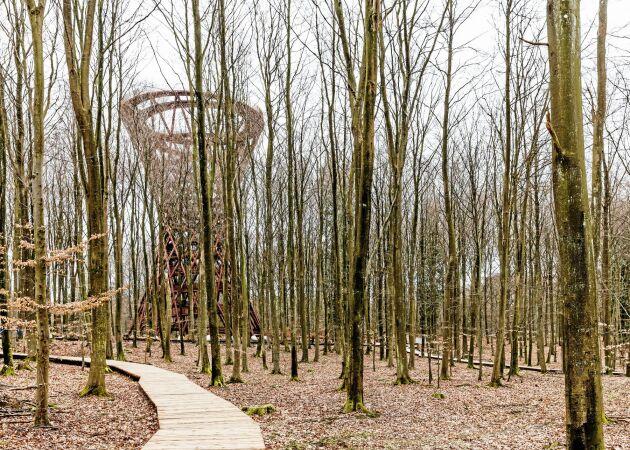 Från skogen vandrar man genom trädkronorna upp till utsiktspunkten.