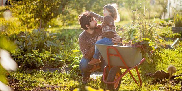 Därför ska du täckodla i trädgårdslandet – INTE höstgräva