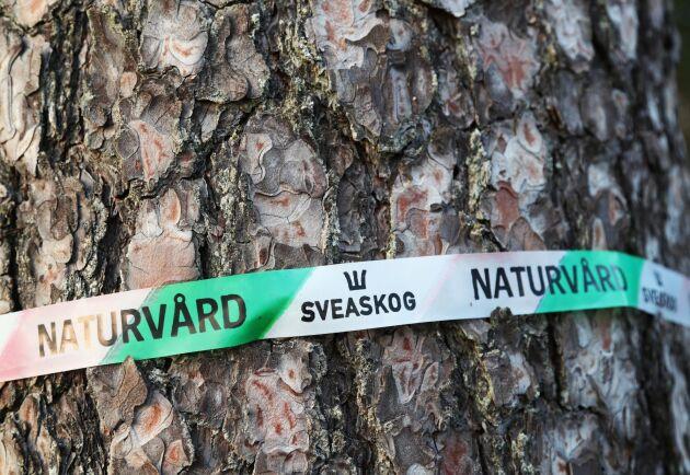 Staten ska inte sälja ut delar av Sveaskog, anser Sverigedemokraterna.