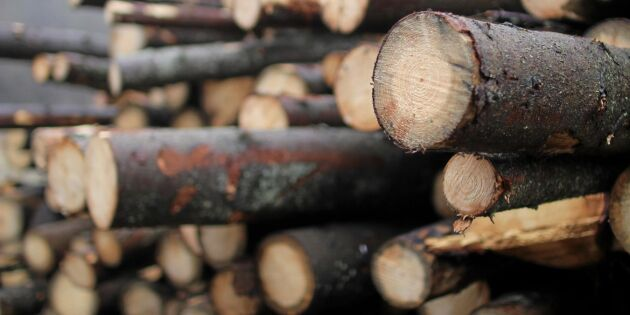 Tyska sågverk gasar – med barkborretimmer
