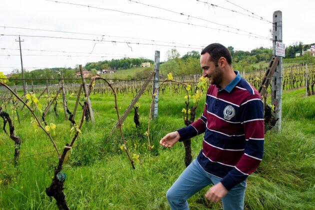 Nicola Fraccaroli är en av de unga italienare som arbetar i vinbranschen. Och han ser fler unga söka sig dit.