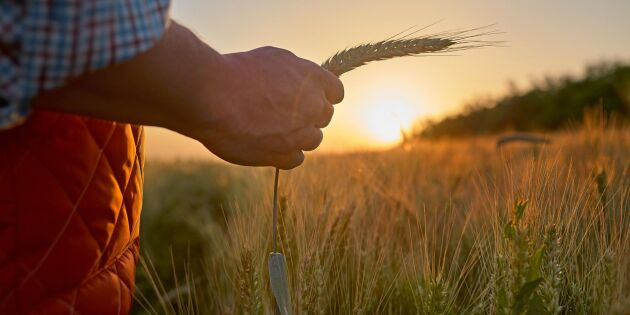 Quiz: Kan du din lantbrukskultur?