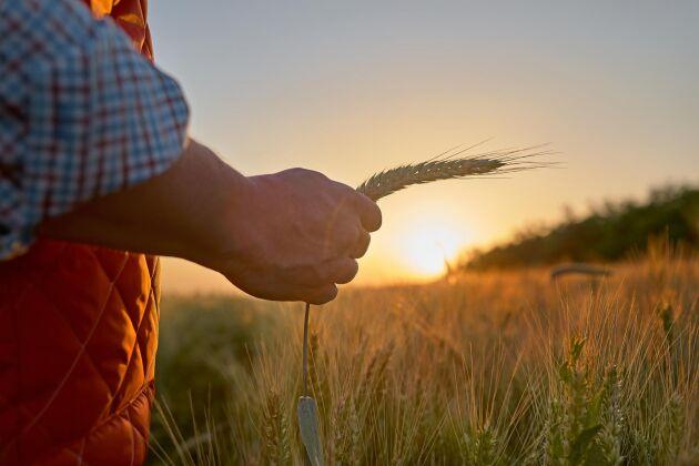 """Land Lantbruks stora quiz """"Lantbruk i kulturen"""" passar utmärkt att ge sig på i midsommartider."""