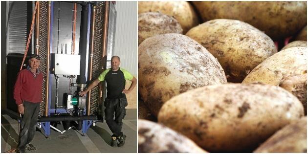 De håller potatisen fin med bra ventilation