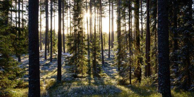 Avesta avverkar skog - på Googles uppdrag