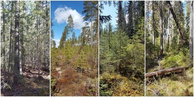 Allt fler efterfrågar hyggesfritt skogsbruk