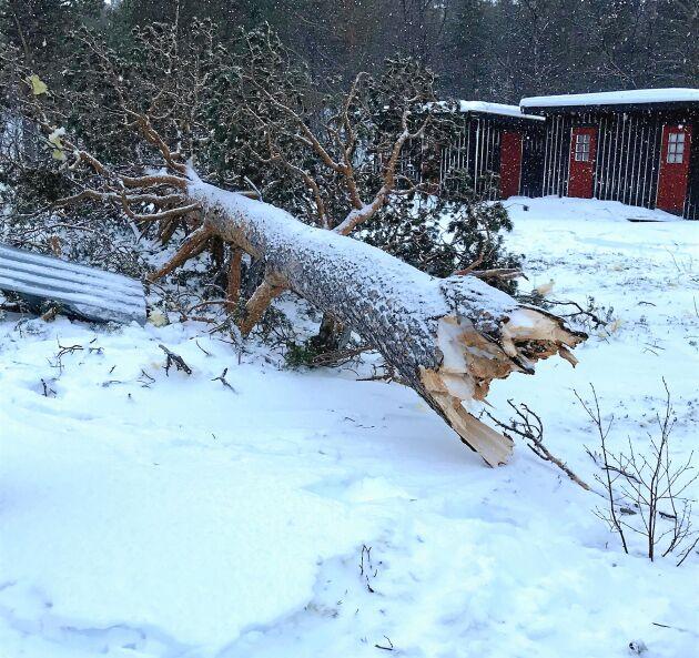 Träd blåste omkull i helgens kraftiga storm.