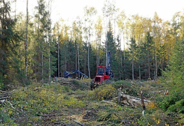 Rekordstora avverkningar de senaste åren har lett till att finlands kolsänkor nästan halverats. Det ställer till det för landets klimatmål.