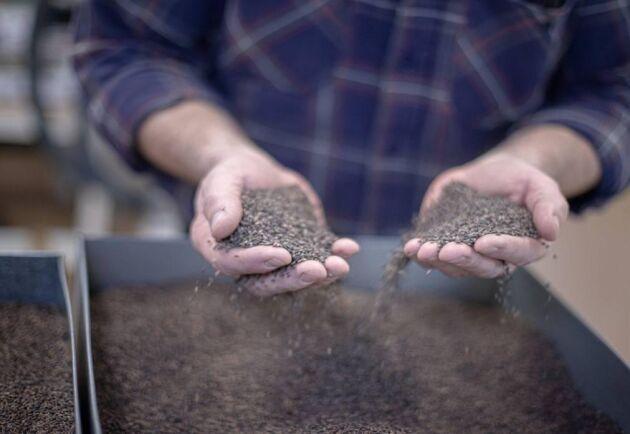 Torrsommaren 2018 resulterade i över 3 gånger så mycket frö som normalt från Skogforsks fröplantager.