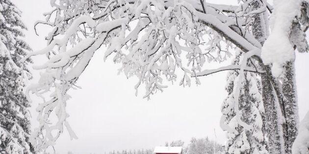Frida gör succé med sina drömska foton från Norrbotten!