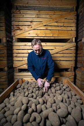 """Vinterkylan har lett till viss kondens på väggarna i potatislagret. Ventilationen körs lite mer och man tillsätter värme. """"Jag övervakar och styr klimatet vid datorn, men jag går ändå ut i lagret varje dag. Här ligger stora värden"""", säger Fredrik Sassner."""