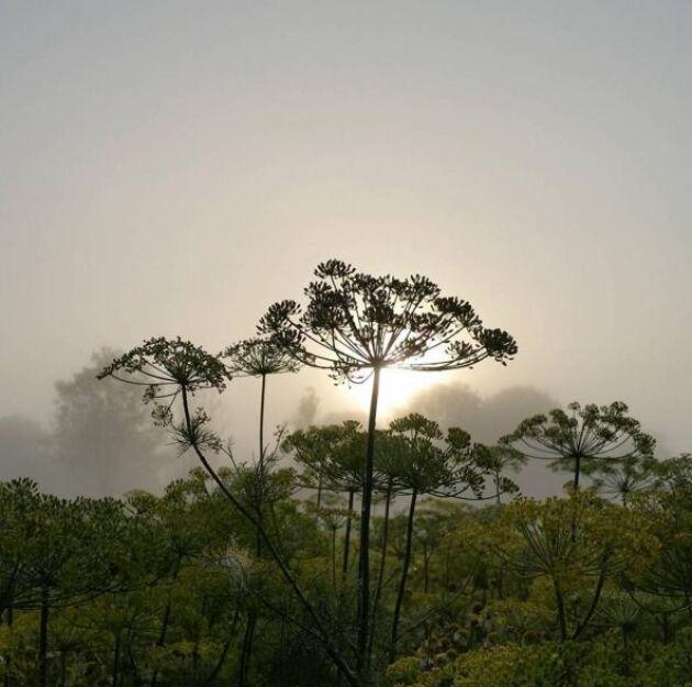 Solen stiger över ett disigt krondillsland, skriver Karin på Ryftes.