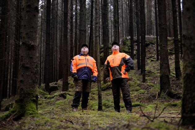 """Bröderna Johannes och Anders Eriksson där de trivs som bäst. I skogen, bland träden. """"Du vet, vi kan jobba tio timmar i skogen tillsammans och ändå ringa varandra på kvällen för att diskutera mer skog"""", skrattar Anders Eriksson."""