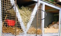 Nytt projekt ska få fart på kanin-näringen