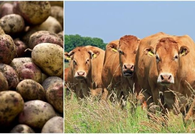 Enligt IPCC-rapporten äts en tredjedel av maten som produceras aldrig upp vilket skapar helt onödiga koldioxidutsläpp.