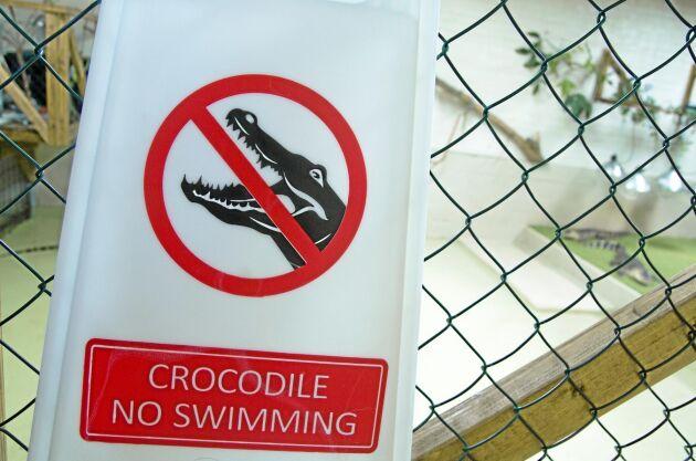 Alligatorerna äter bland annat kanin, kyckling och fisk.