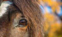 """""""Lagen kring försäljning av levande djur måste ändras snarast"""""""