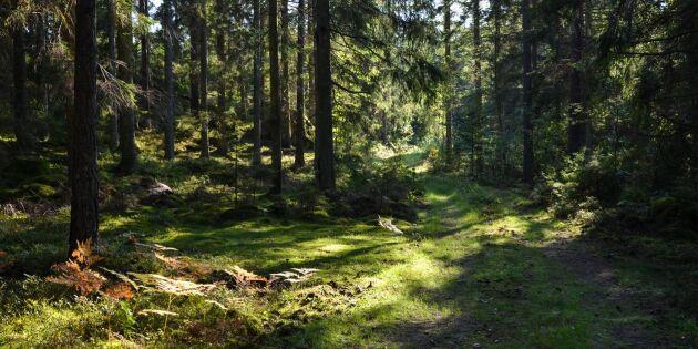 Här är kommunerna som äger mest skog