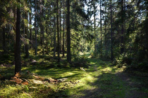 Det skiljer en hel del i skogsinnehav mellan kommunerna Malung-Sälen i topp och Höganäs i botten.