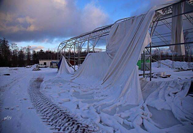 Duken på det helt nya ridhuset trasades sönder av stormen. Staket måste ses över, träd röjas undan och stallbyggnader repareras efter Alfrida.