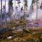 Maj är tiden för skogsbränningar