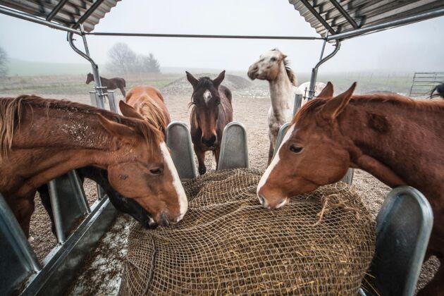 EU-kommissionen har klubbat den sammanslutning för dialog kring djurvälfärd som initierades av bland andra Sverige.