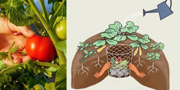Supersmart nyhet – odla i nyckelhålsbädd