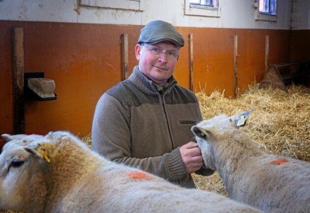Lammproducenten Johnny Nederman på Hornsunds gård är med i ett projekt som ska leda till att svenska bönder får betalt för sin ull.