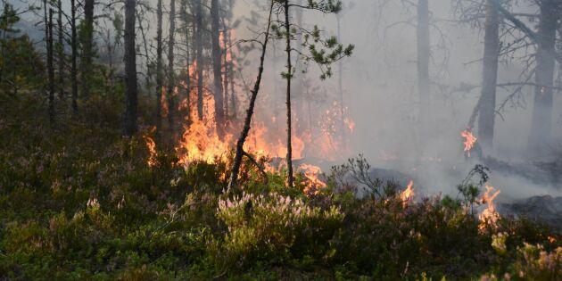 Skogsbrand vid gränsen till Norge under kontroll